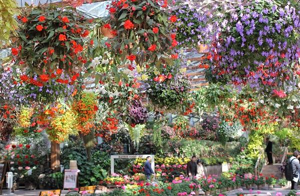 松江フォーゲルパーク、花の展示室の様子 花がたくさん咲いてる美しい写真