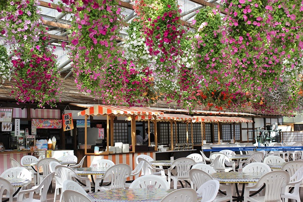 松山フォーゲルパーク、レストラン「フローラ」の写真