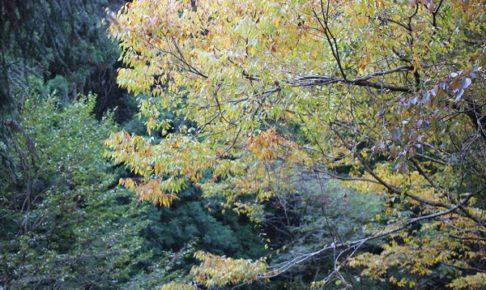 春日渓谷の紅葉の写真