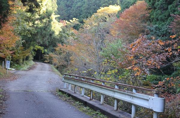 紅葉が綺麗な春日渓谷までの山道の写真