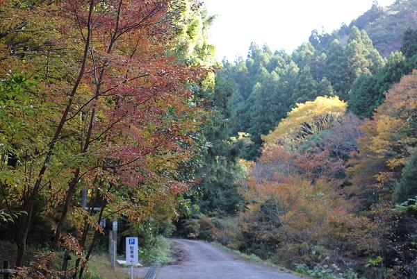 春日渓谷の紅葉の様子の写真