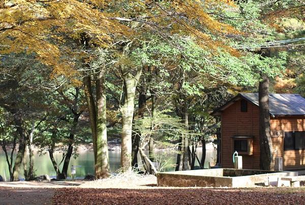 広川原キャンプ場のようす、コテージと紅葉の写真
