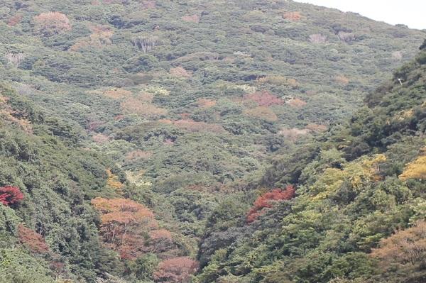 多良岳の紅葉の様子の写真