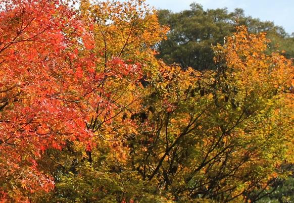 轟渓流、紅葉の様子の写真