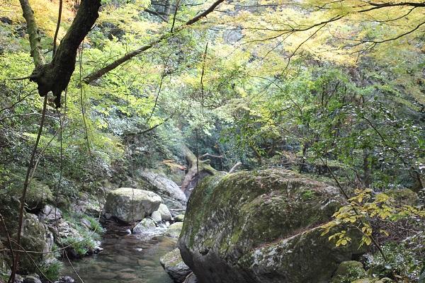 渓流沿いの散策道から見た、渓流と色づいた木々の写真
