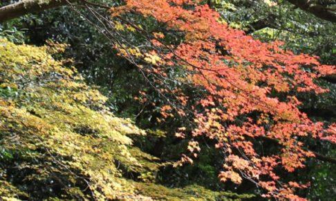 轟渓流のモミジの色どりの写真
