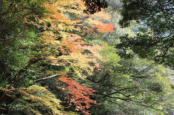 轟渓流の紅葉の写真