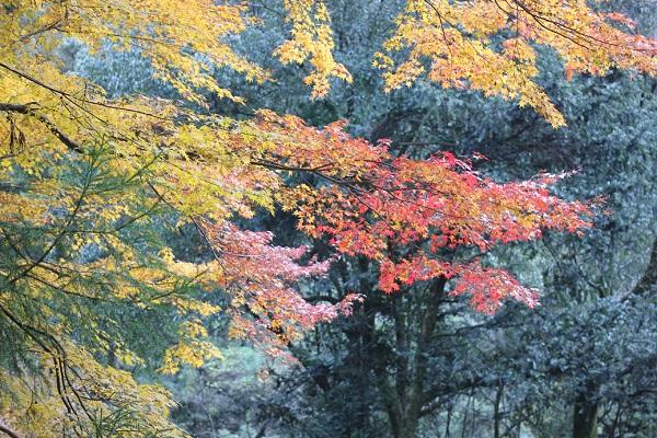 千綿渓四十八潭、龍頭泉の紅葉の写真
