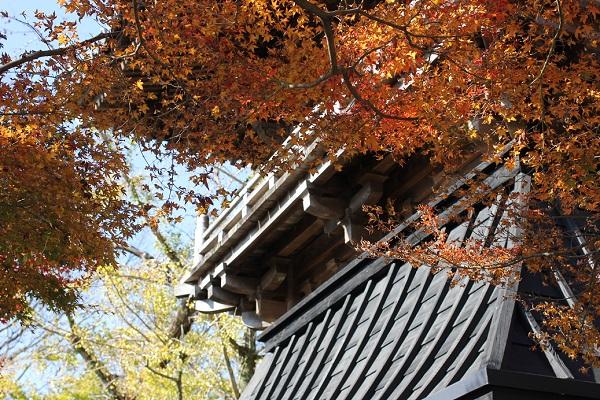 安勝寺の赤い紅葉の写真