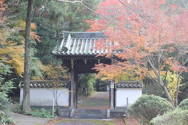 天祐寺の参道入り口の門と赤いモミジの写真