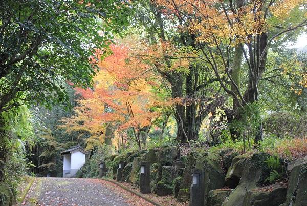 天祐寺、参道とモミジの写真