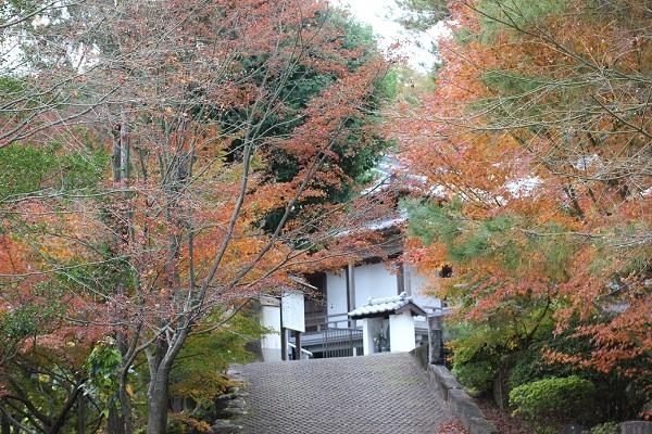 天祐寺奥の院「虚空蔵堂」建物とモミジの写真