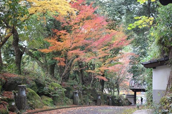 下りてきた天祐寺の参道、紅葉したモミジの写真