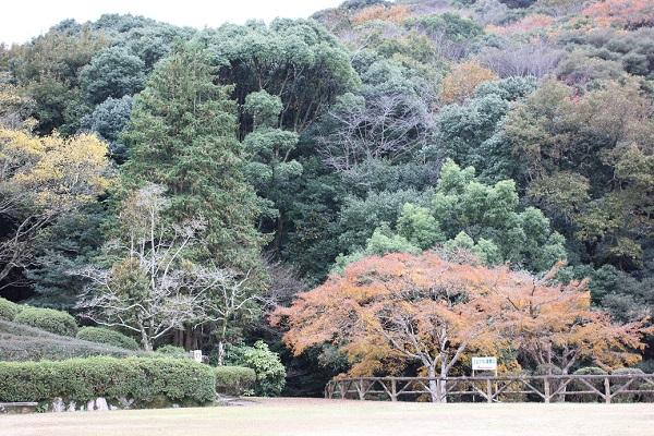 上山公園、紅葉した山の様子の写真
