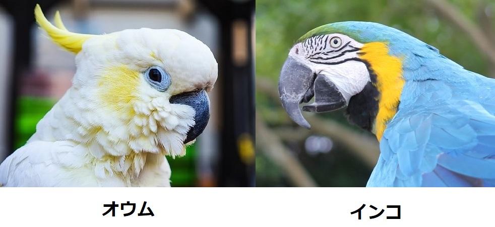 大型のインコとオウムの比較写真