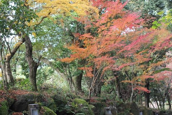 天祐寺、参道沿いのモミジの写真(グラデーションが綺麗)