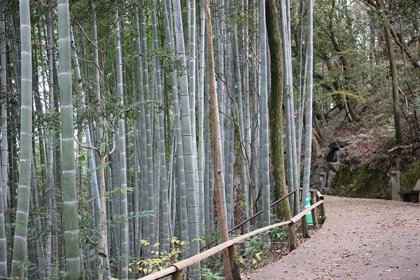 天祐寺の参道の竹林の様子の写真