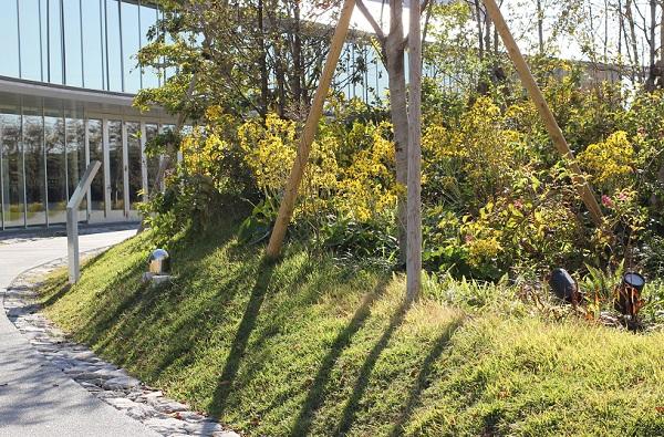 大村 ミライon図書館の庭の入り口付近、ツワブキが咲く庭の様子の写真