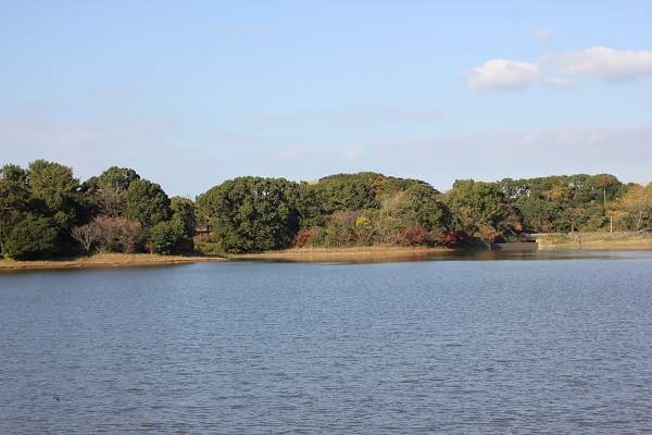 諏訪池の写真