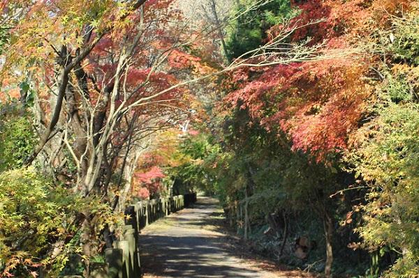 諏訪池の紅葉がきれいな遊歩道の写真