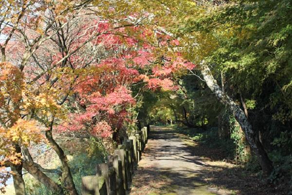 諏訪池周辺の遊歩道、紅葉がきれいなようすの写真