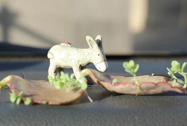 車の中のフロント、胡蝶の舞の葉の新芽とヤギのオブジェの写真
