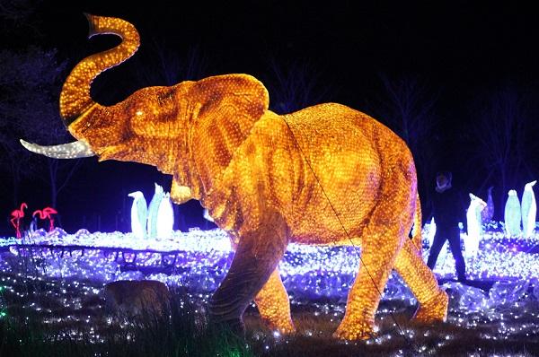 ハウスンボス、光のどうぶつえん、ライトアップされたゾウの写真
