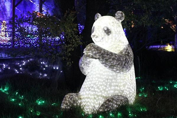 ハウスンボス、光のどうぶつえん、ライトアップされたパンダの写真