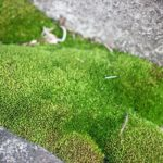 道端で見かけた緑の苔の写真