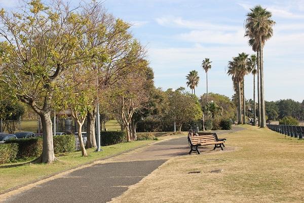 森園公園、大きな木やヤシの木、ベンチの写真