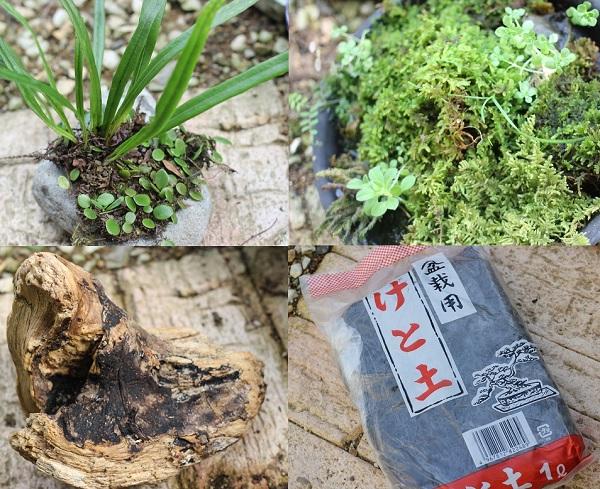 盆栽に必要な物の写真(植物・流木・ケト土)