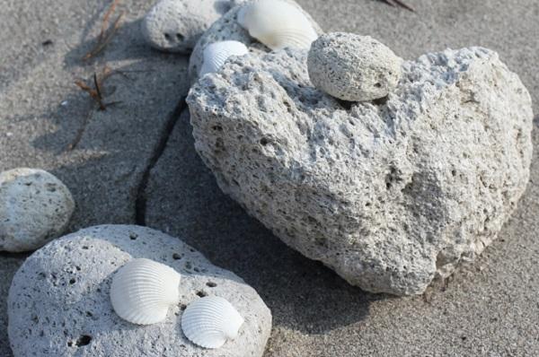 吹上浜海岸にあった軽石と貝殻の写真