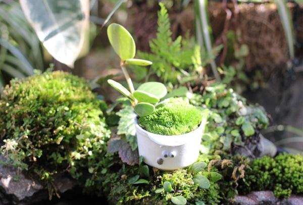 椎猫白魚(しいね しらうお)さんの小さな植木鉢を盆栽風にアレンジした写真