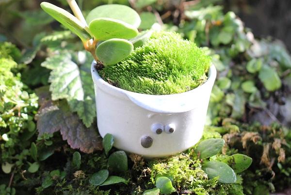 ちょっと不安そうな表情の小さな盆栽鉢の写真(椎猫白魚(しいね しらうお)