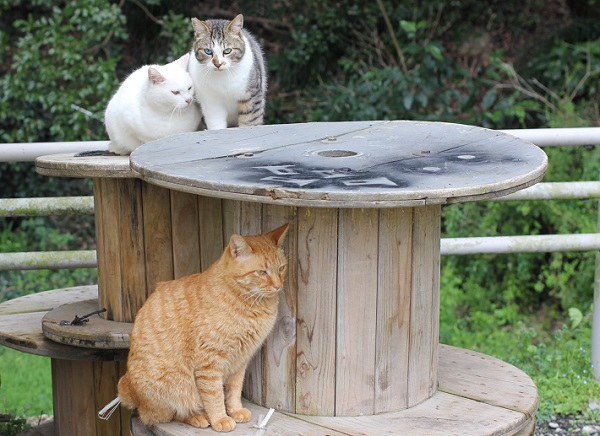 公園で見かけた3匹の野良猫の写真