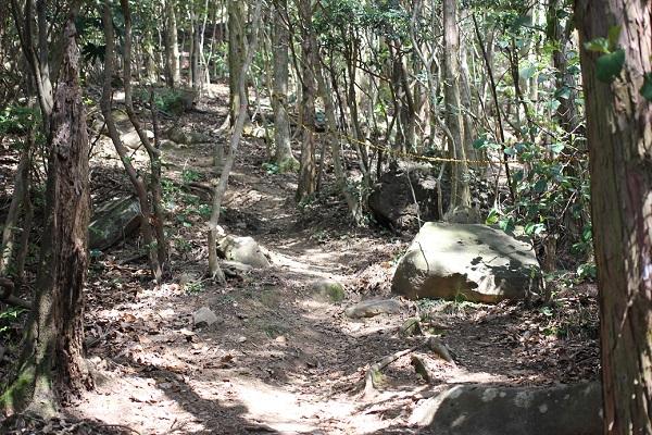 矢筈岳(やはずだけ)へ続く山道の写真