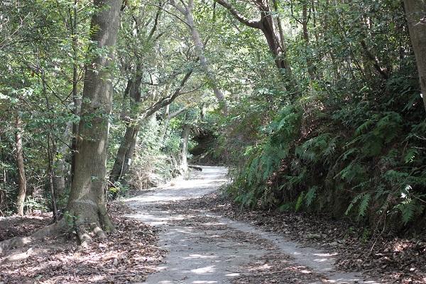 あぐりの丘の里山、棚田へ向かう道の写真