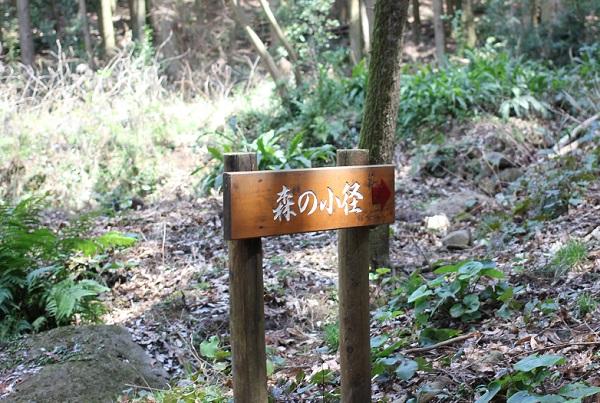 あぐりの丘の里山、森の小径の写真