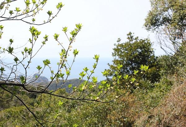 あぐりの丘の里山、どくろ松付近からみた景色の写真