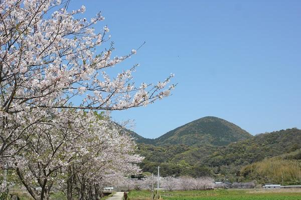 飯盛町、田結の川沿いの桜並木、山を背景とした小道と畑