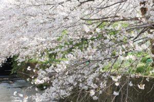 西浦上駅近くの線路沿いの桜並木の写真