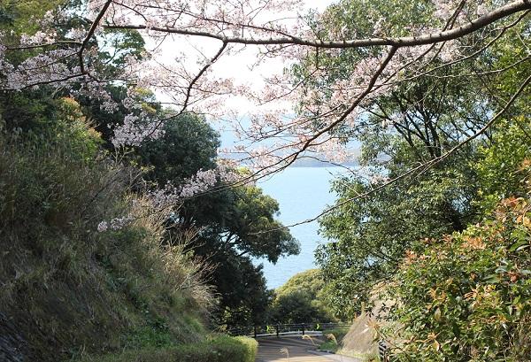 崎野自然公園、キャンプ場へ続く道、海と桜の写真