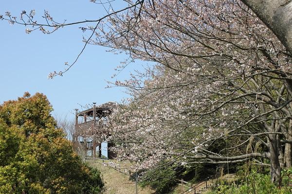 崎野自然公園、桜と展望台への写真