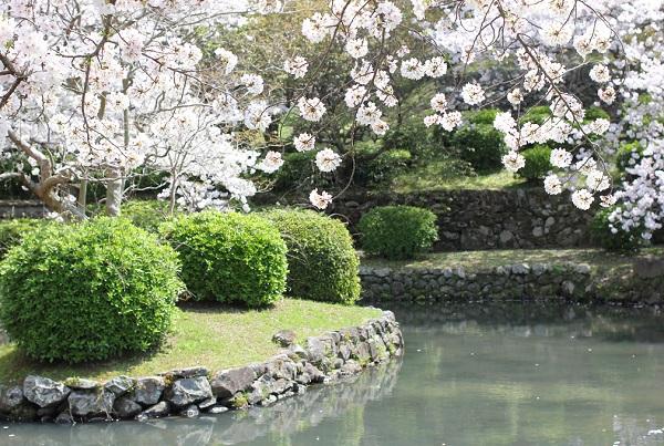 大村護国神社の桜と池の写真