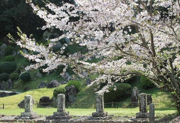 石庭の前の大村藩追遠碑と戊辰戦争で亡くなった人の碑と桜の写真