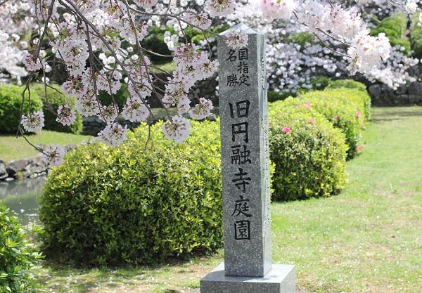 桜と庭園、 旧円融寺庭園の石碑の写真
