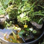 初夏のメダカ池の様子