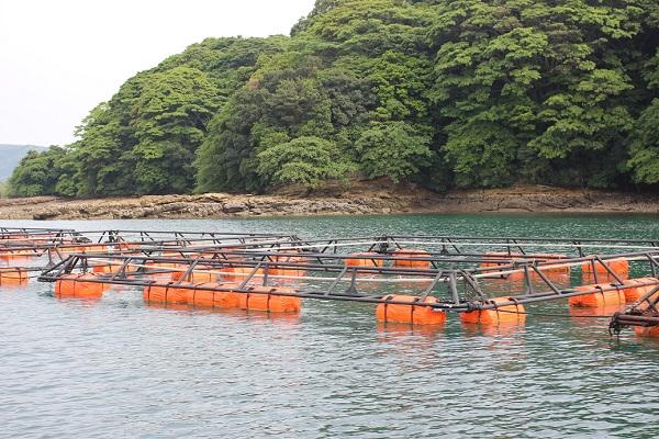 九十九島の海、養殖しているイカダの写真