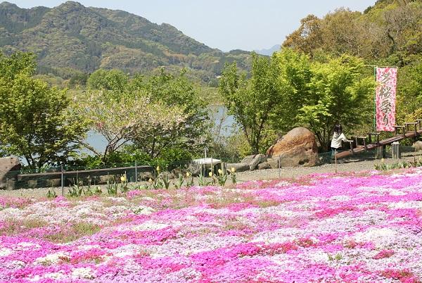 芝桜と山、ため池の写真