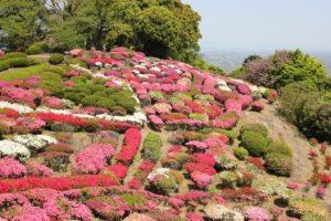 白石町の歌垣公園、つつじが見頃を迎えてる様子の写真